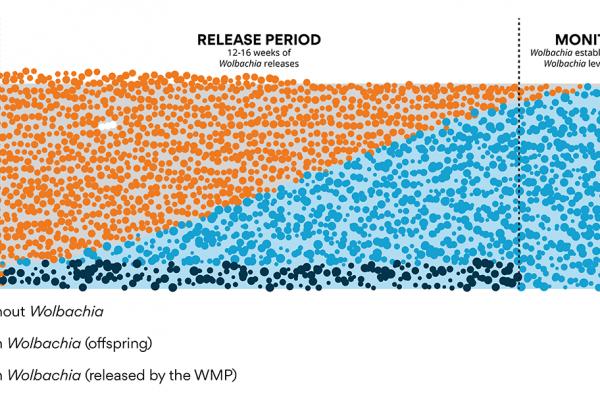 Wolbachia establishment graph